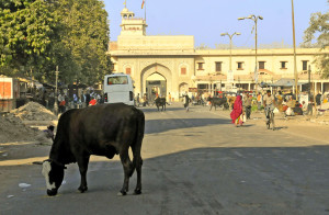 Street in Jaipur (Photo by Don Knebel)
