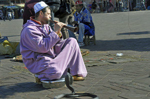 Snake Charmer on the Square in Marrakesh, Morocco (Photo by Don Knebel)